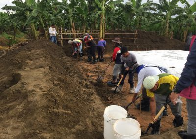 Kema crossed the globe 4 - Anaerobic soil disinfestation trial kick off philippines