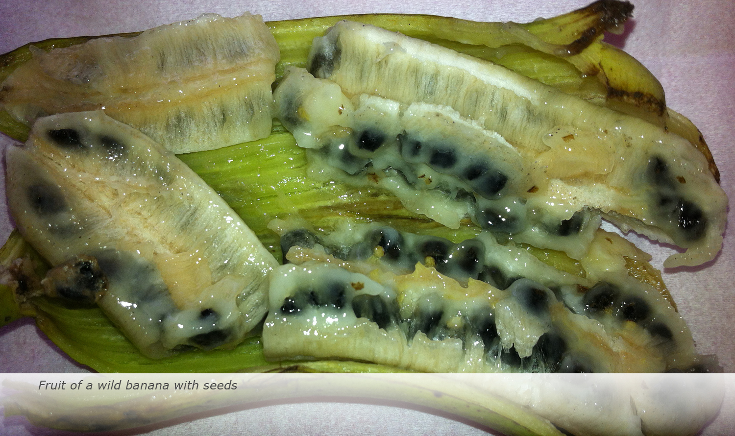 Info & Facts: Fruit of a wild banana with seeds