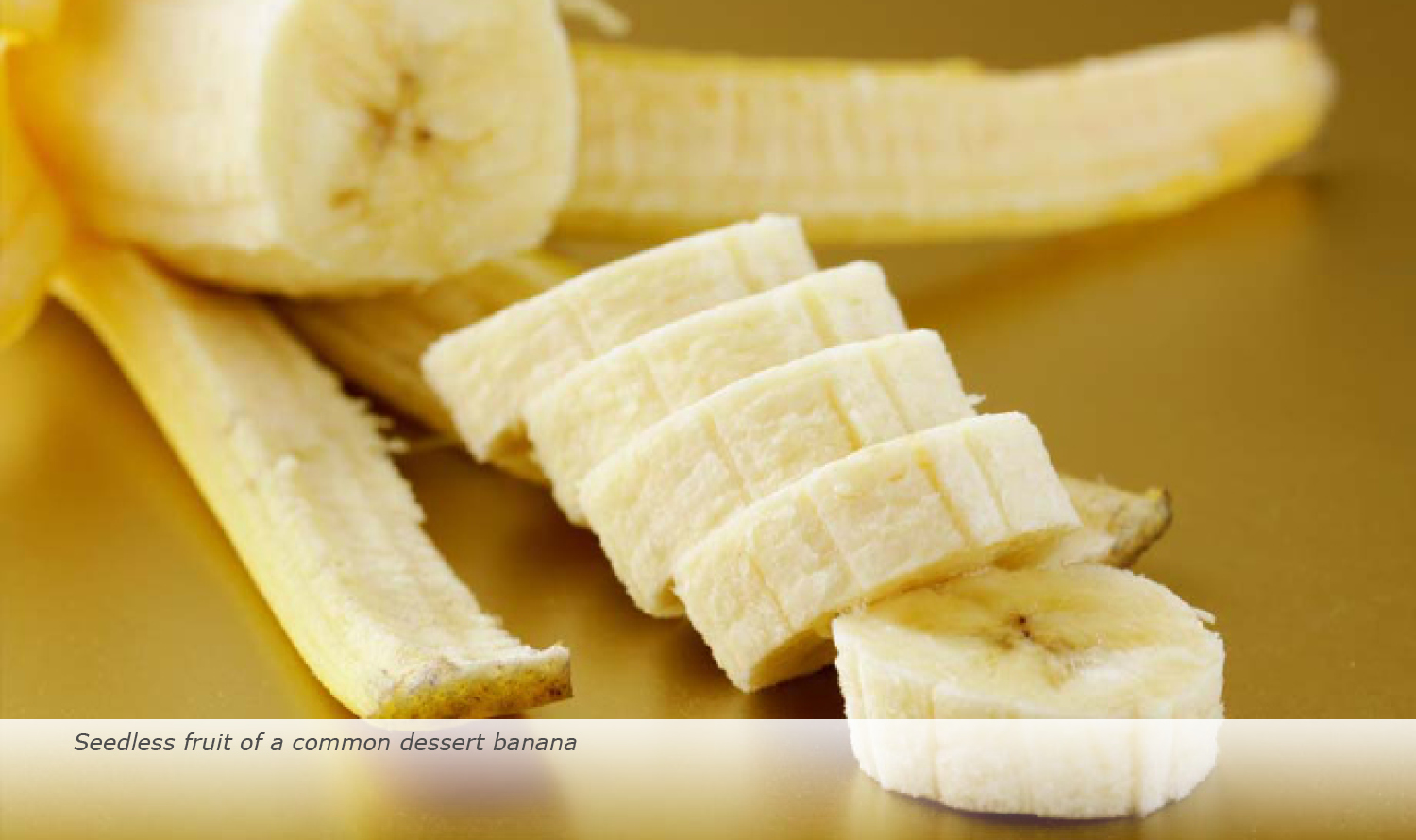 Info & Facts: Seedless fruit of a common dessert banana