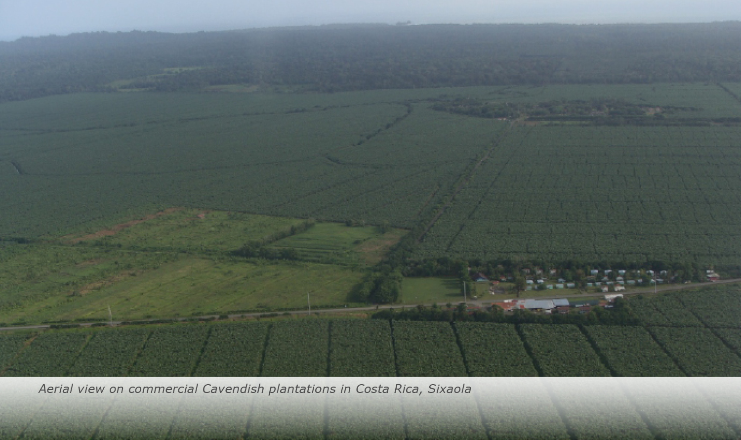 Info & Facts: Aerial view on commercial Cavendish plantations in Costa Rica, Sixaola
