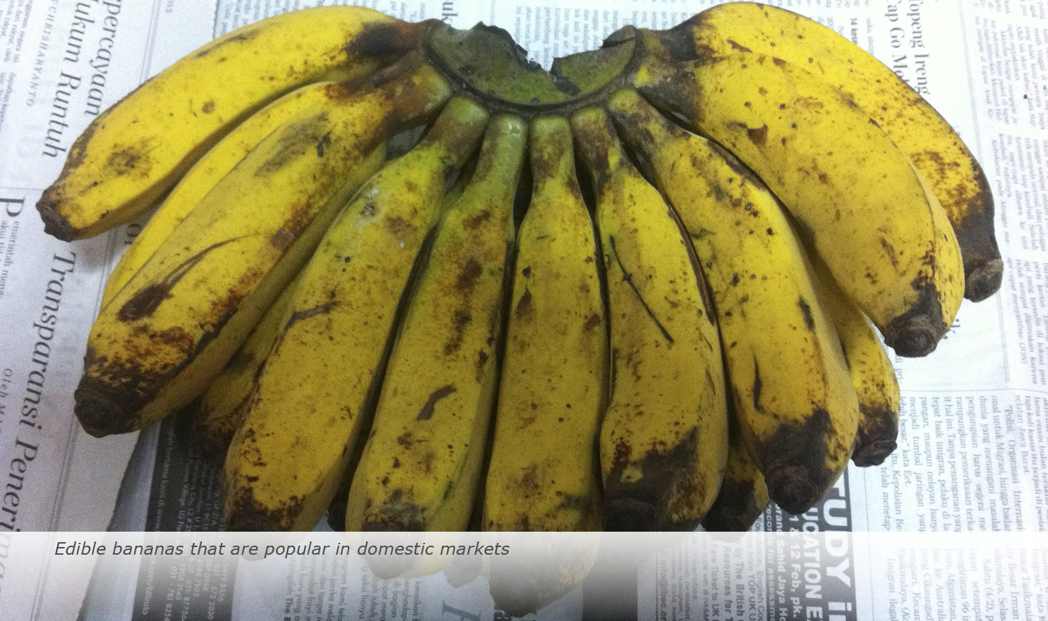 Info & Facts: Edible banana that are popular in domestic markets