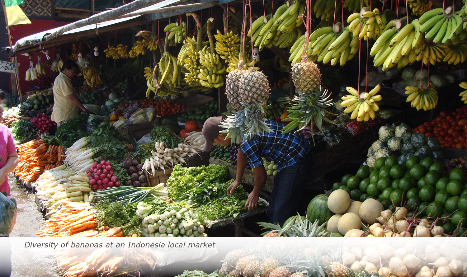 Info & Facts: Diversity of bananas at an Indonesia local market