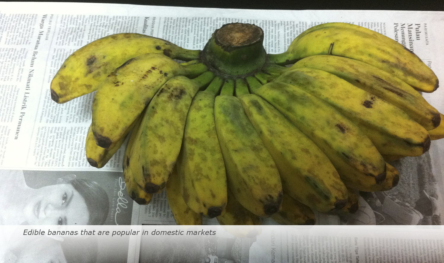 Info & Facts: Edible bananas that are popular in domestic markets
