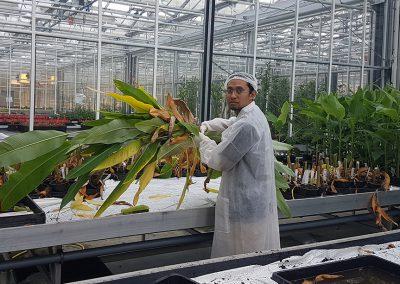 Fajarudin Ahmad in Wageningen University & Research greenhouse