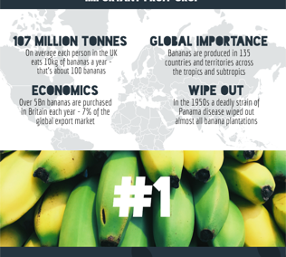 Poster of Bananas project. Securing the future of the UK's favourite fruit